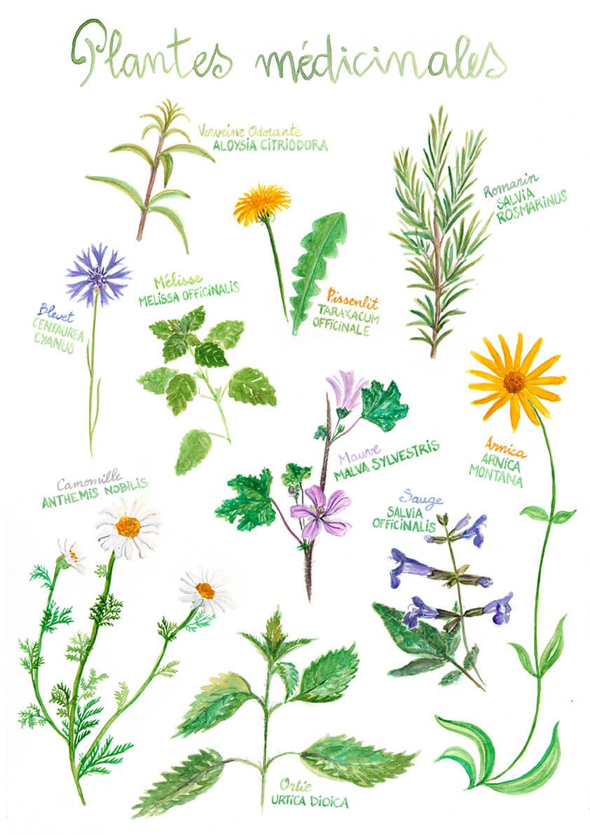 dessins de plantes